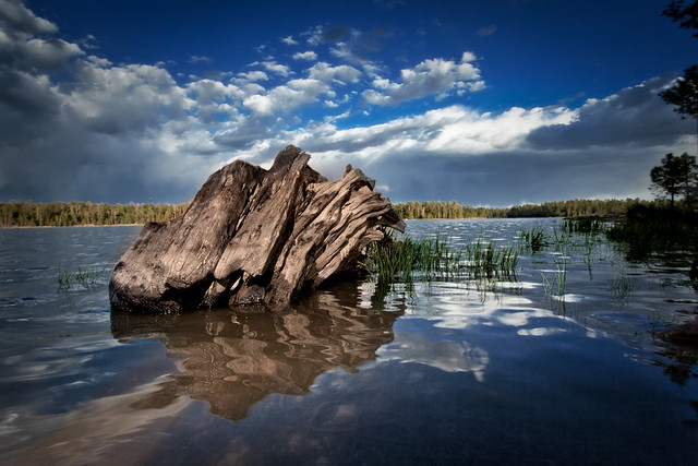 Wood stump Willow Springs Arizona | This was taken while I ...