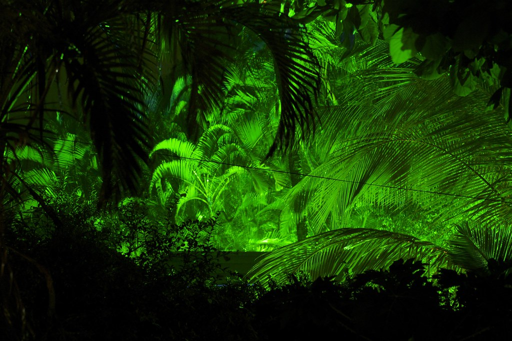 rainforest wallpaper