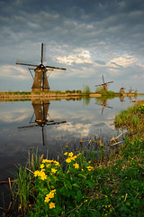 Kinderdijk Flowers | by Philipp Klinger Photography