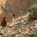 A roaming chicken in Kathmandu