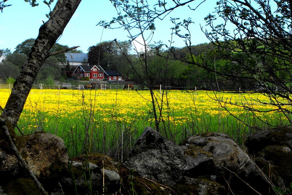 Роскошные пейзажи Норвегии - Страница 40 3510028046_f82160096d_b