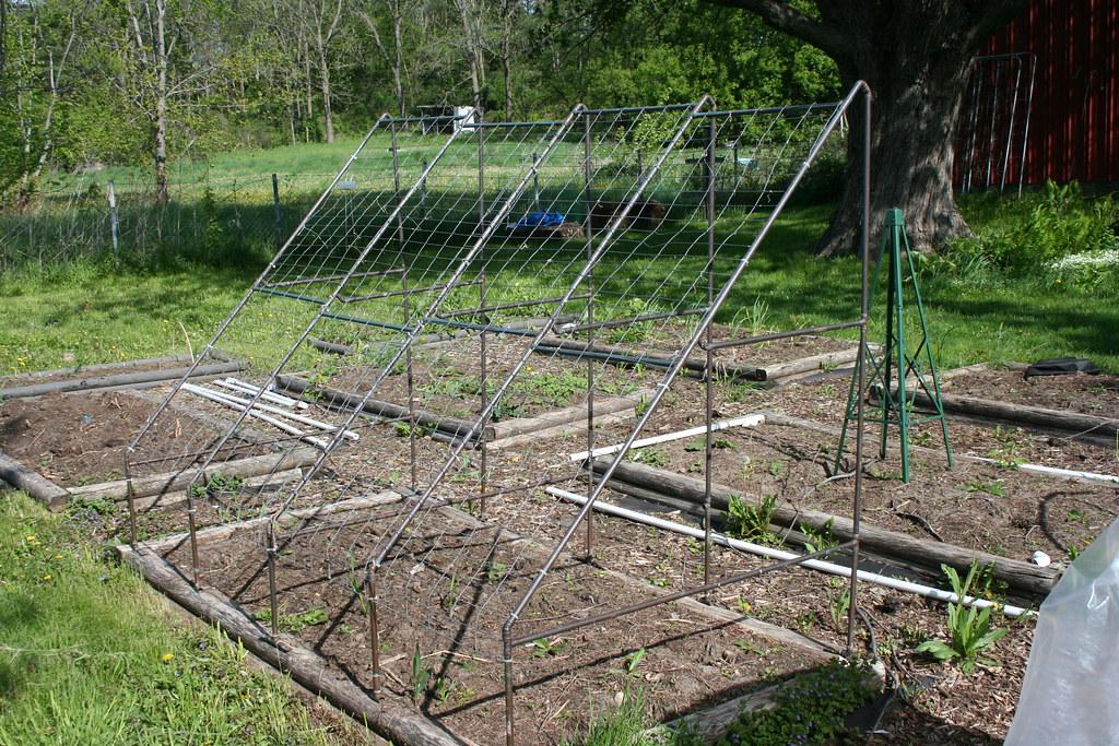 Cucumber trellis   We plant under the low end. the vines ...