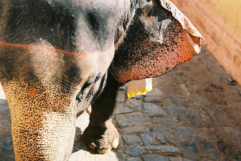 Painted Elephants Photography Painted Elephant