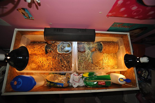 Tortoise Table Uv Light In The Middle Basking Lamps For