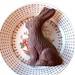homemade chocolate bunny