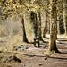 Donadea Forest Park