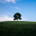 Lost mountain tree