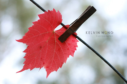 Autumn Leaf Bokeh | by Kelvin Wong (Away)