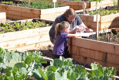 Father shows daughter the bean sprouts growing in the raised beds | by USFS Region 5