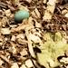egg 1759 copy