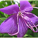 Purplelicious  ...view Large