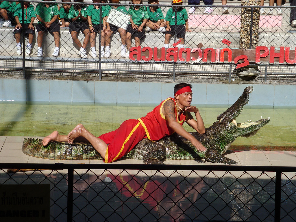 Phuket Zoo 6  Crocodile Show, Phuket Zoo  Angela Savage  Flickr