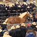 Gordonville Horse Auction