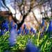 quintessential spring