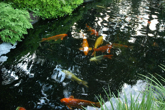 Koi Pond Meditation Garden Self Realization Fellowship Encinitas California Usa 3602