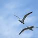 Gaviotas, seagulls.