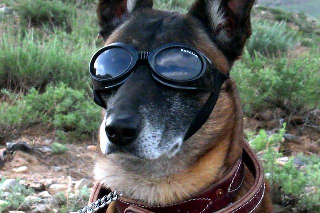 Dog Brace Where Can I Buy It Ont