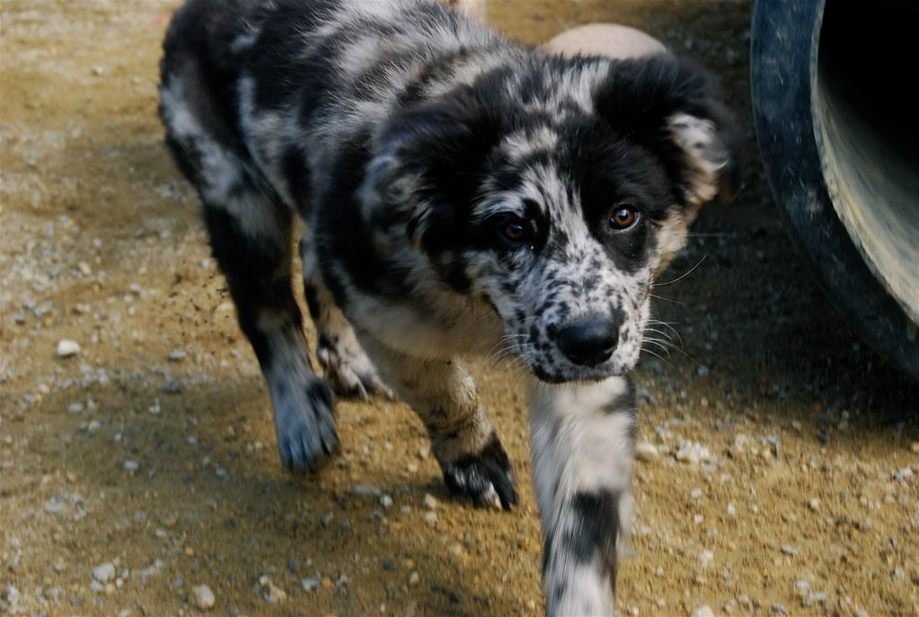 CUTE MUTT PUPPY DOG - Stock Photos : Masterfile