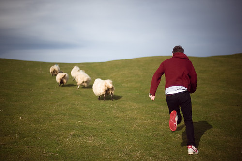 chasing sheep is best left to shepherds a drive in the