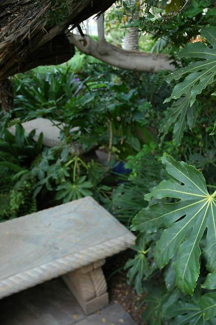 Elephant Ear Plants Benches Shady Area For Meditation Meditation Garden Self Realization