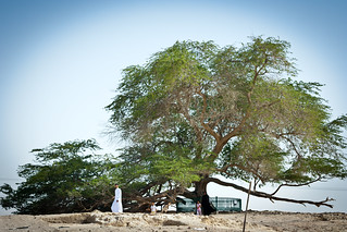 Visiting the tree of life | by Omar Chatriwala