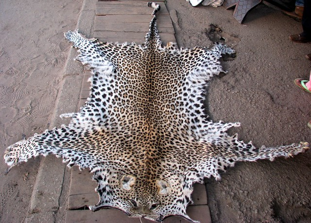 Stop Poaching Leopard Skin For Sale In A Shop See A