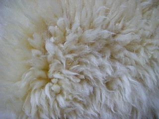 Sheepskin | by Blue Lotus