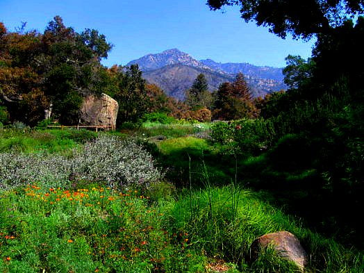 santa barbara botanic garden meadow cathy berry flickr