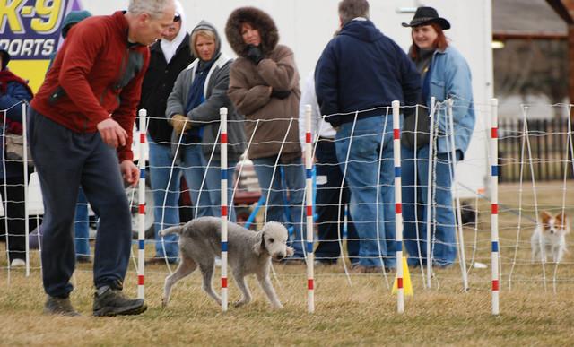 Woof Dog Training Co Uk Worthing