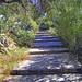 2005_05_09_Athen_Lycabettos_Stien på vei ned_02