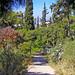 2005_05_09_Athen_Lycabettos_Stien på vei ned_03