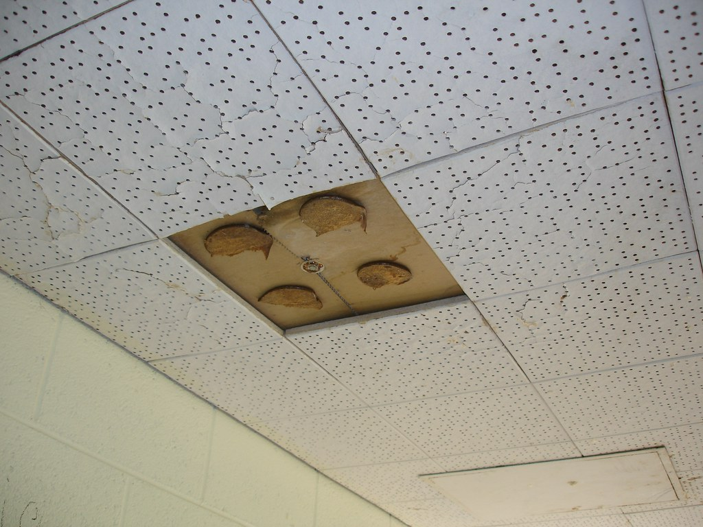 Ceiling tile asbestos adhesive glue pods non asbestos for Is there asbestos in old drywall