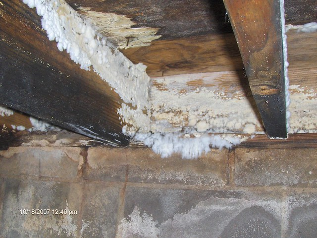 Image Result For White Mold In House