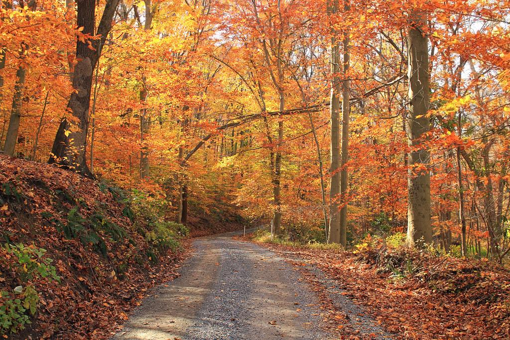 Penn Forest Natural Burial Park Verona Pa