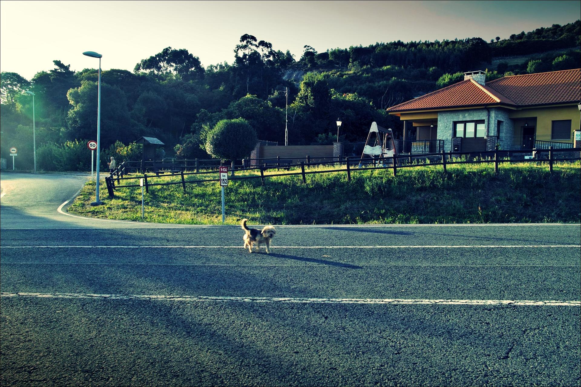 길을 안내하는 개-'카미노 데 산티아고 북쪽길. 카스트로 우르디알레스에서 리엔도. (Camino del Norte - Castro Urdiales to Liendo) '