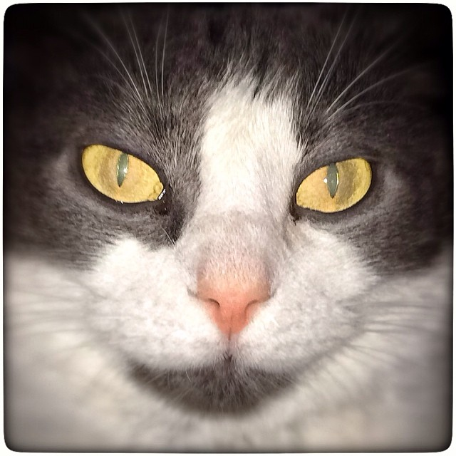 My cat gave me the scary eyes yellow pet stare nos - Scary yellow eyes ...