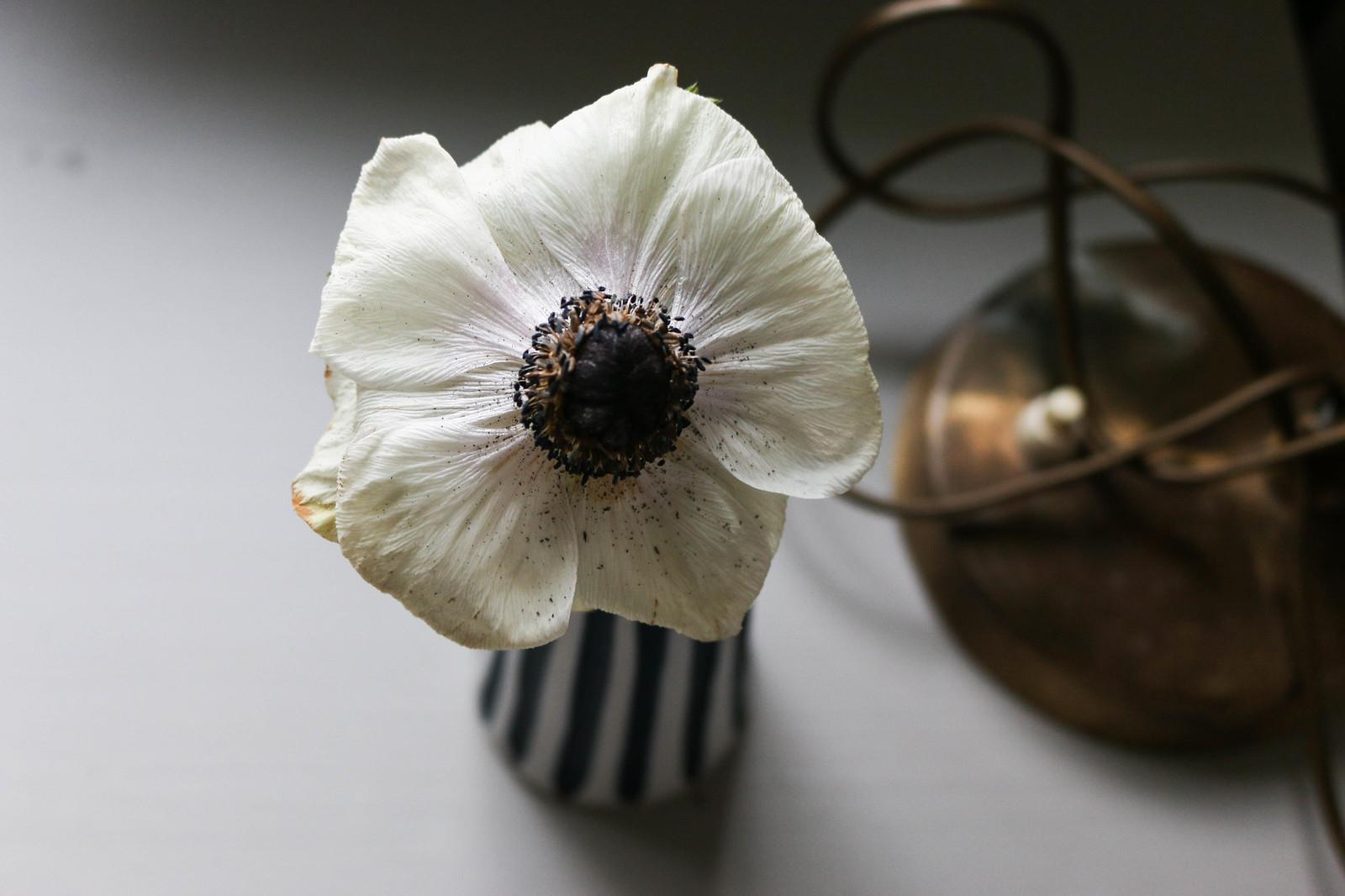 anemon vintagelampa
