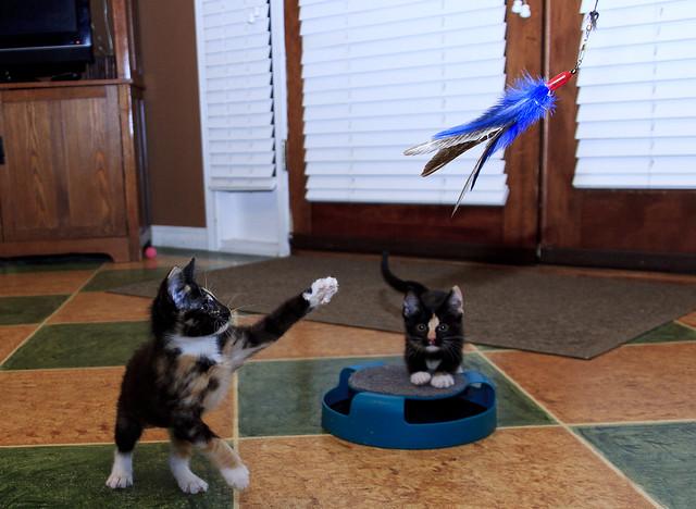 Fosters Cat Litter