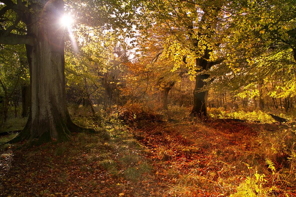 autumn woodland nov 2013 lakes4life flickr