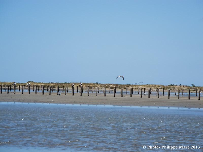camargue plage napol 233 on 224 port louis du rhone philippe marc flickr