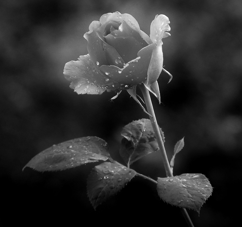 Black white and pink photography