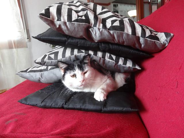Such cat.