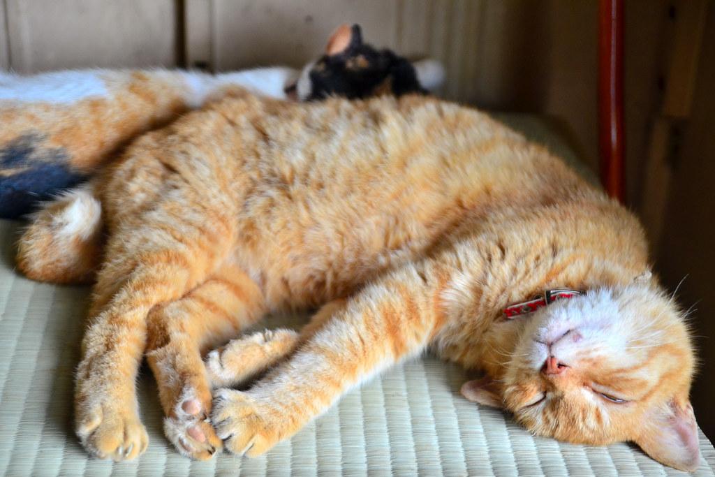 Gamo Big Cat Cfs Igt  Joules