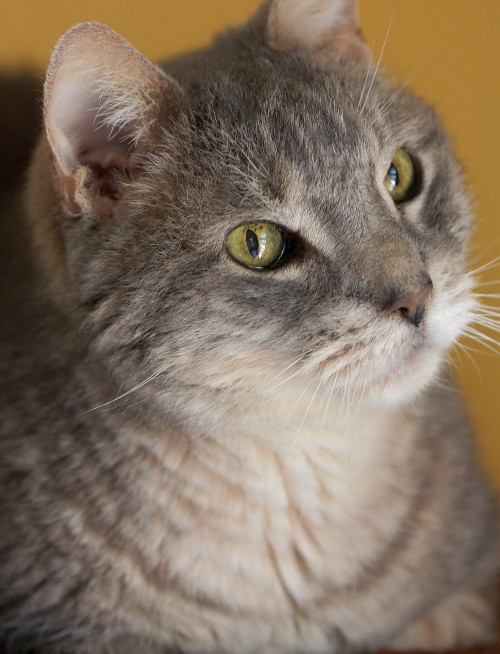 Kidney Failure In Cats How Long To Live