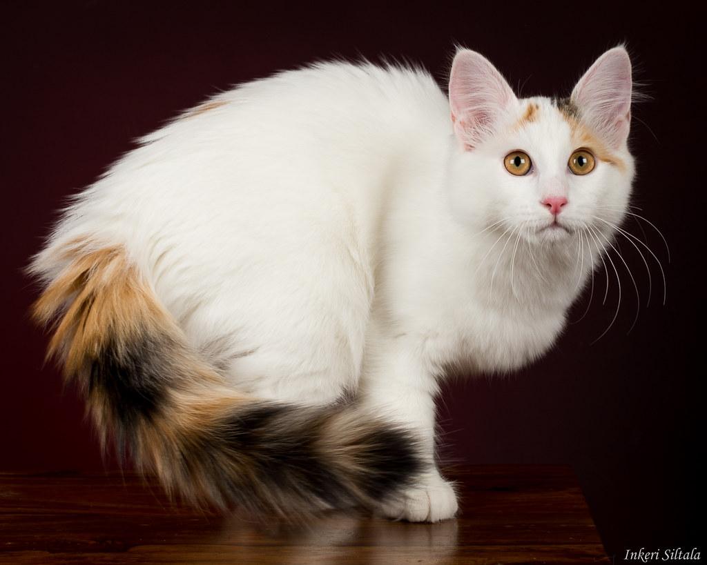 cat fur brush