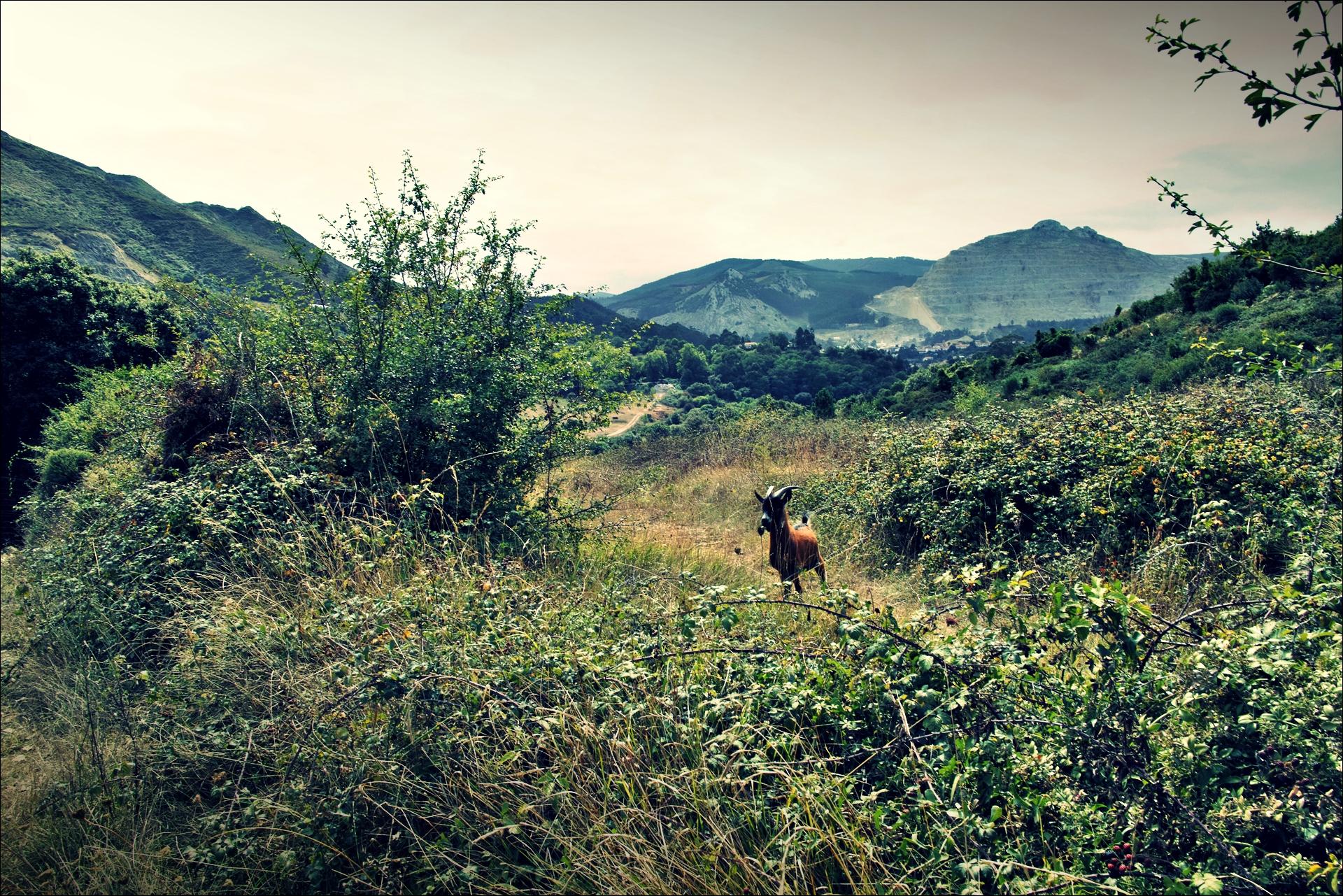염소-'카미노 데 산티아고 북쪽길. 포르투갈레테에서 카스트로 우르디알레스. (Camino del Norte - Portugalete to Castro Urdiales) '
