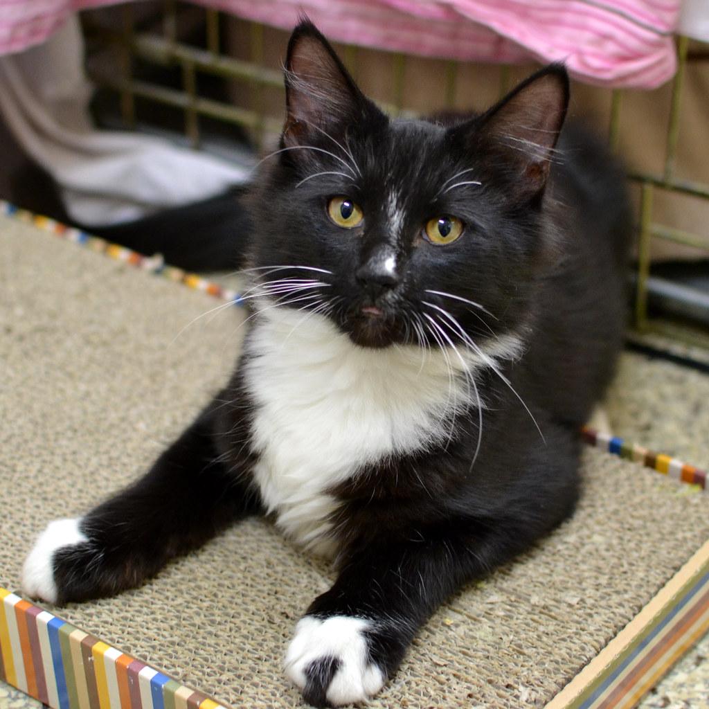 Black Cat White Cat Ao Authoress