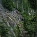 Old growth near Lake Melakwa