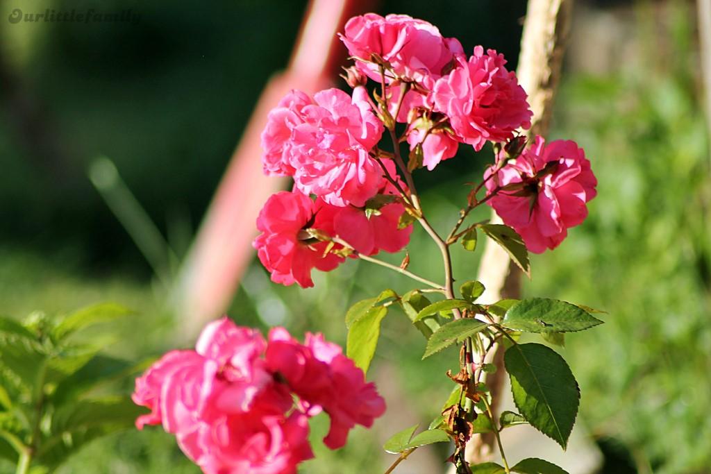 mon jardin 9