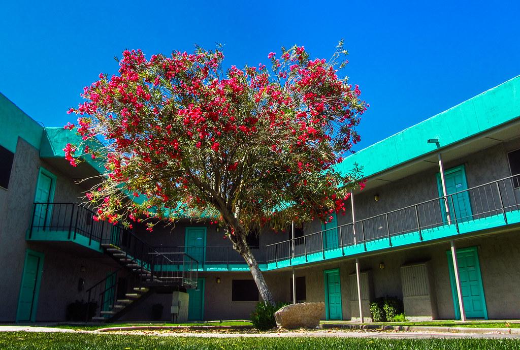 Red Oleander Bush